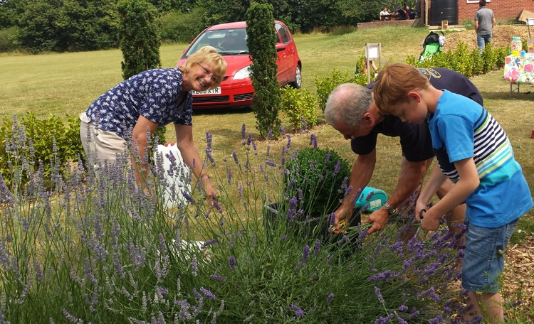 Jane and Thomas harvesting Lavender